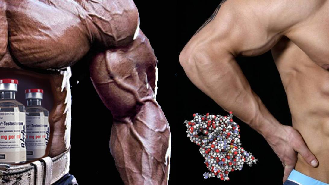 gh muscoli