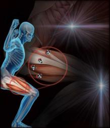 effetti-creatina-monoidrato-bodybuilding-muscoli
