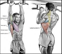muscoli trazioni