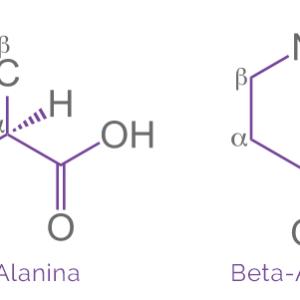 beta alanina bodybuilding