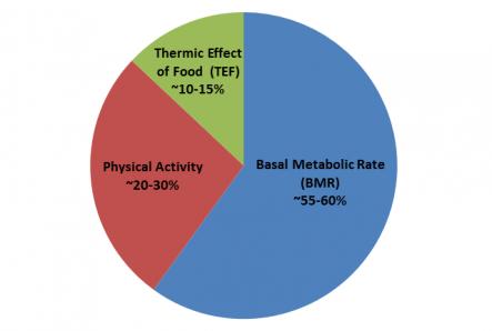Conteggio calorie e carboidrati