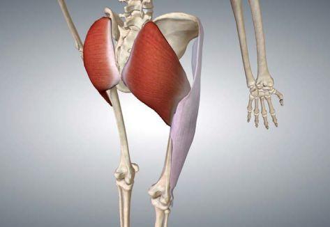 anatomia grande gluteo
