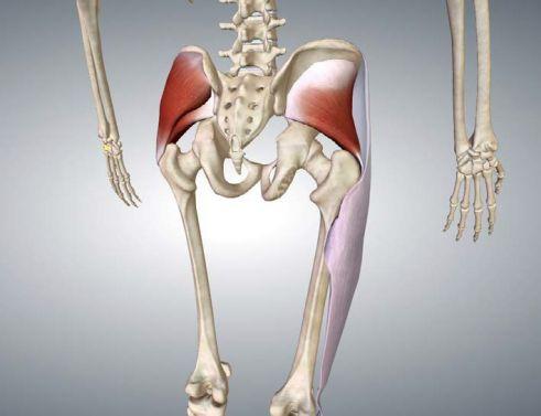 Anatomia del piccolo gluteo