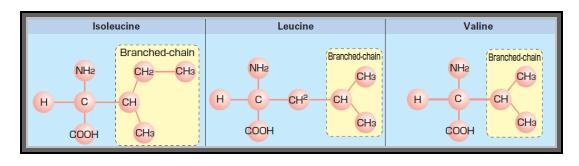 bcaa, aminoacidi ramificati