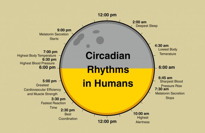 ritimi circadiani carboidrati a cena