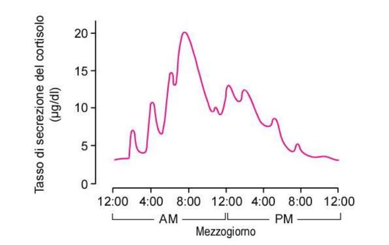 cortisolo notturno